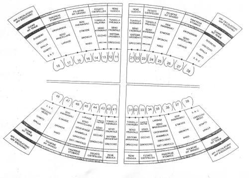 Mappa_denti-organi_01