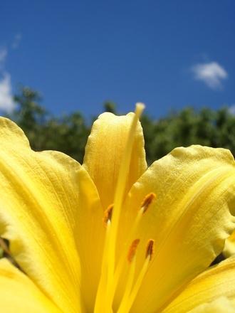 sunny-day-3-1384299